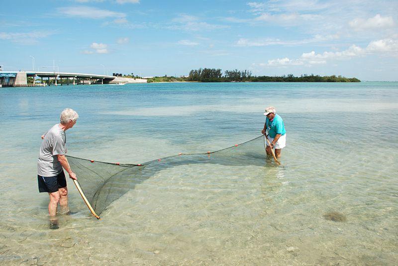 Florida Marine Science Educators Association (FMSEA)